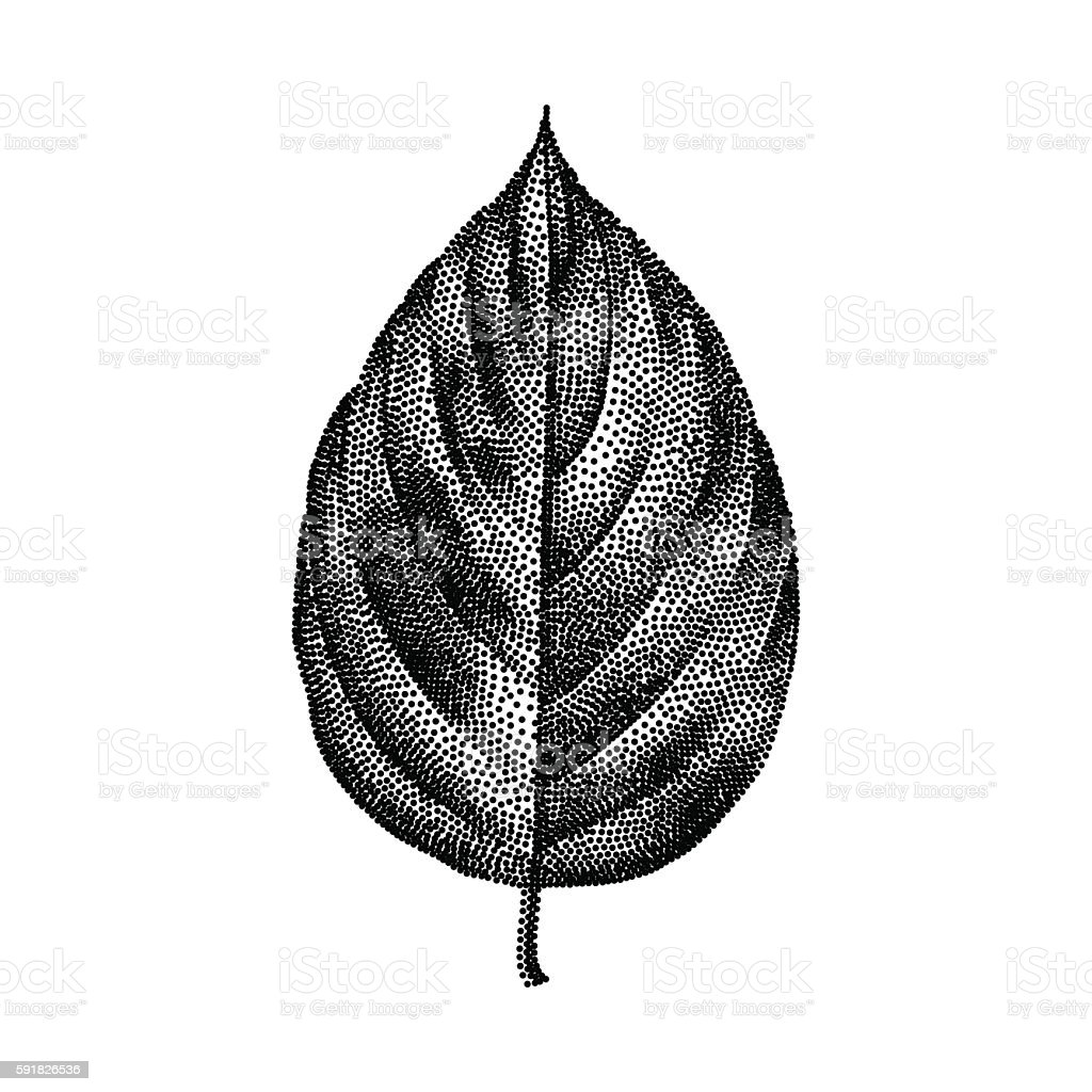 Engraving Birch Leaf Hand Drawn Vector Illustration vector art illustration