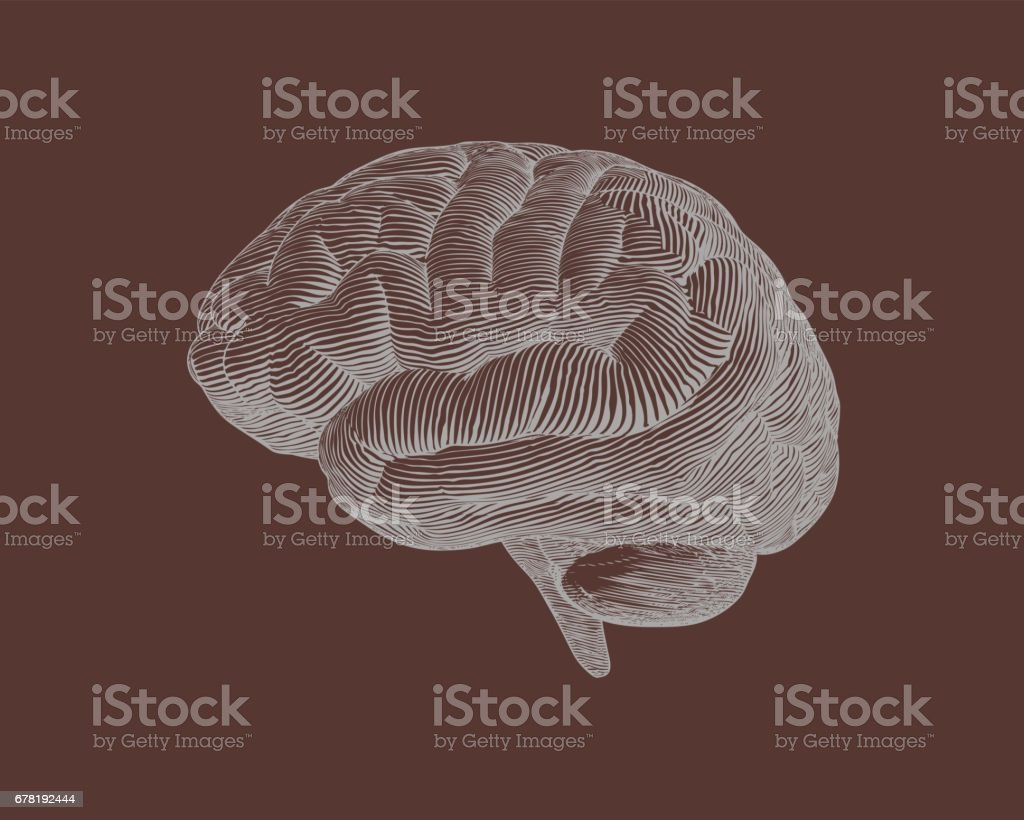 Engraving brain illustration on brown bg stock vector art more engraving brain illustration on brown bg royalty free engraving brain illustration on brown bg stock biocorpaavc Images