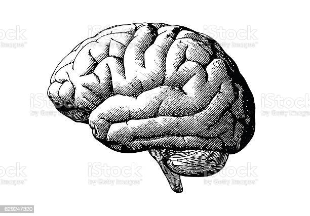 Engraving brain with black on white bg vector id629247320?b=1&k=6&m=629247320&s=612x612&h=m0dumw6sdxyqietni5y9ads4pz8gaxuuasq9hhg1npy=