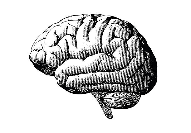 Engraving brain with black on white BG Engraving brain illustration in grayscale monochrome color on white background biomedical illustration stock illustrations