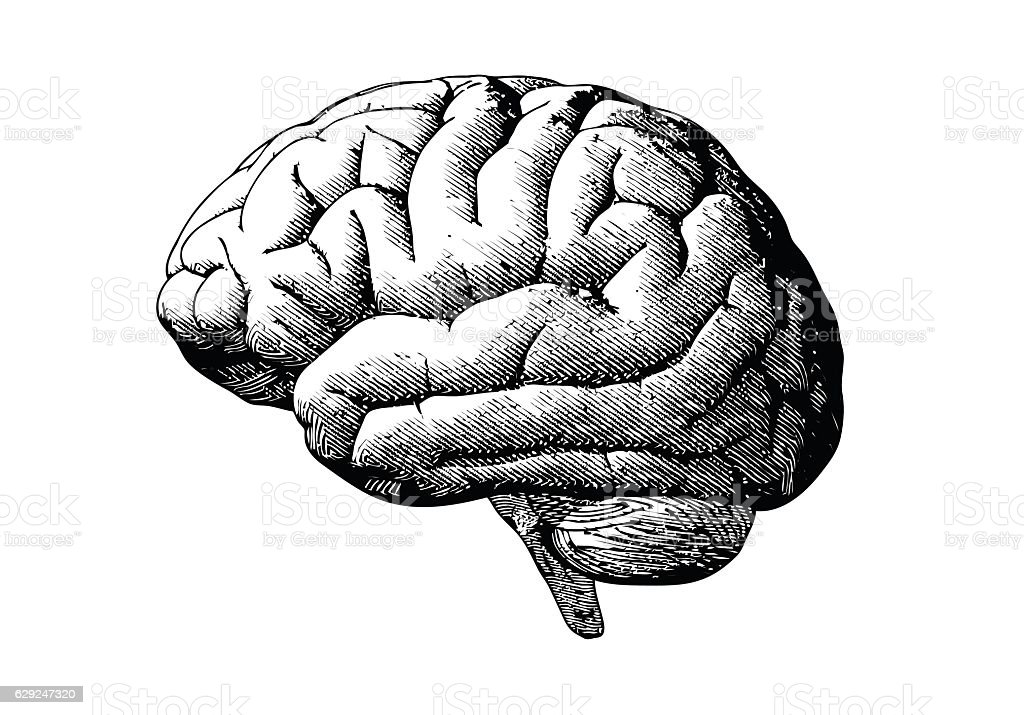 Engraving brain with black on white BG - ilustración de arte vectorial