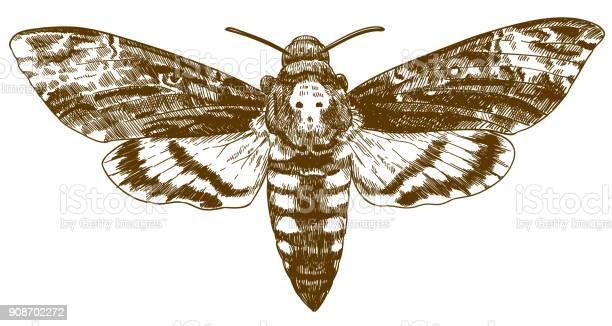 Engraving drawing illustration of african deathhead hawkmoth vector id908702272?b=1&k=6&m=908702272&s=612x612&h=zi7pji7emog4smribwrcwygzqobxe9rww044j8vlb o=