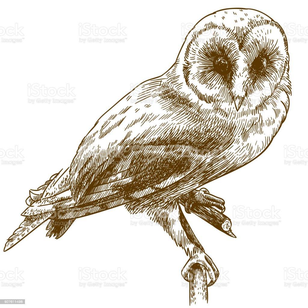 穀倉貓頭鷹雕刻畫插圖向量藝術插圖
