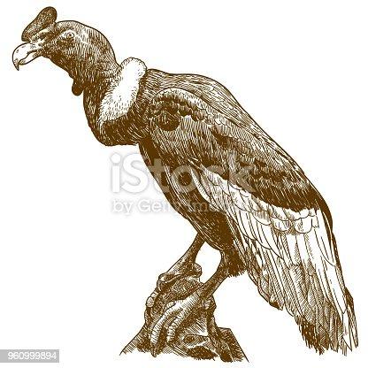 istock engraving drawing illustration of big andean condor 960999894