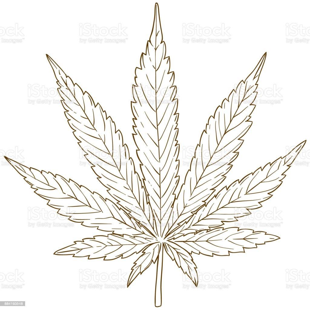 Gravure Dessin Illustration De Feuille De Cannabis Cliparts
