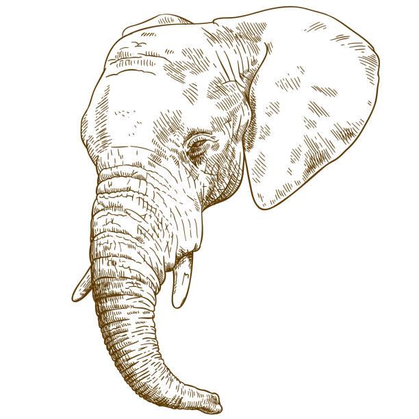elefantenr ssel vektorgrafiken und illustrationen istock. Black Bedroom Furniture Sets. Home Design Ideas