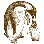 engraving drawing illustration of emperor penguin and nestling