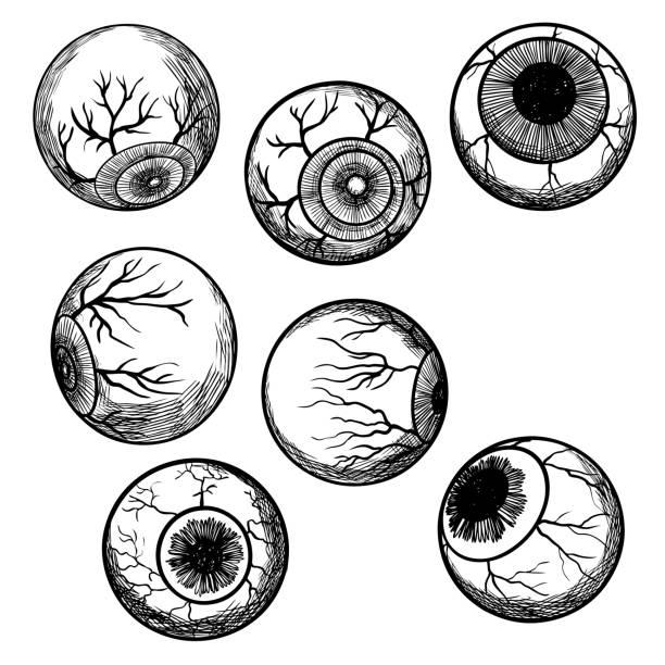 ilustraciones, imágenes clip art, dibujos animados e iconos de stock de grabado mano dibujo ojo humano conjunto. colección de ojos en diferentes direcciones. vector. - globo ocular