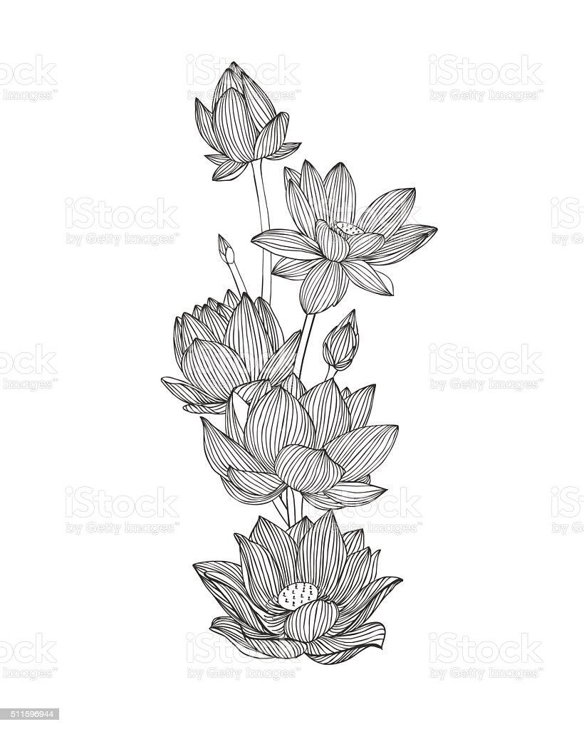Engraving hand drawn illustration of flower lotus. vector art illustration