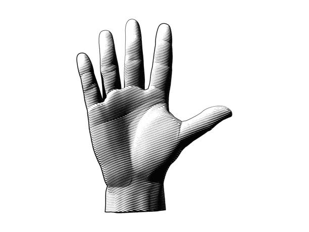 engraving hand illustration isolated on white bg - dłoń stock illustrations