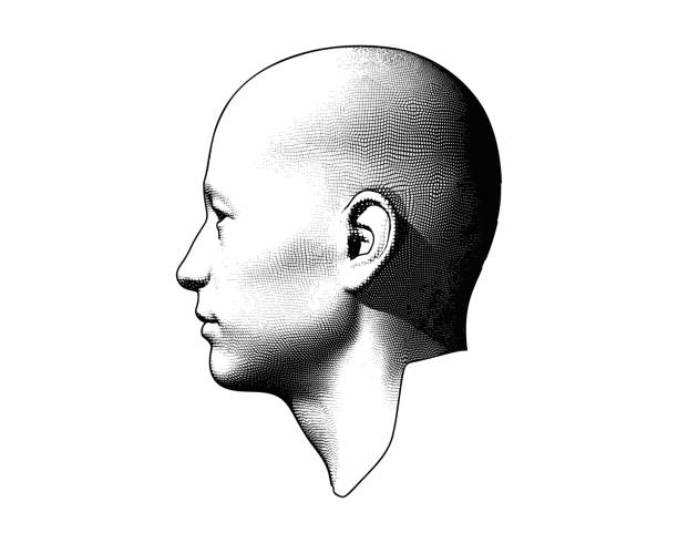 engraving human head illustration on white bg - отвести взгляд stock illustrations