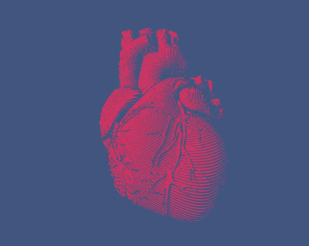 Engraving human heart illustration vector art illustration