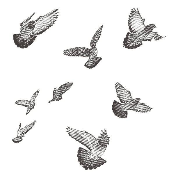Engraving illustration of a flock of birds in flight. Engraving illustration of a flock of birds in flight. pigeon stock illustrations