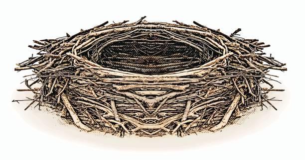 bildbanksillustrationer, clip art samt tecknat material och ikoner med gravyr illustration av en eagle nest - bo