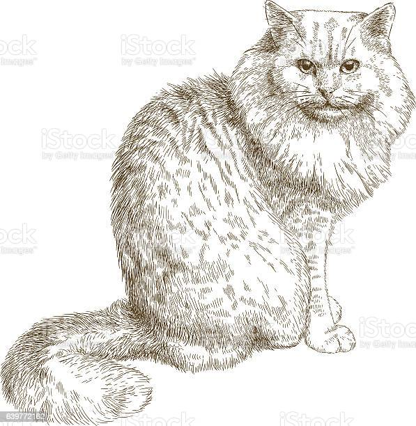 Engraving illustration of big cat vector id639772162?b=1&k=6&m=639772162&s=612x612&h=jklwddwucm4c7926f hpoy8u71cvhw9fivm f88owz8=