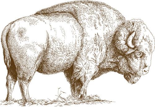 Engraving Illustration Of Bison Stock Illustration - Download Image Now