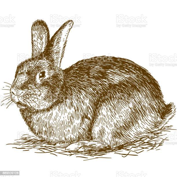 Engraving illustration of bunny vector id889326128?b=1&k=6&m=889326128&s=612x612&h= hzqqz 3 wicptj5shs0d0xbydt1m kwwtd gh2dydc=