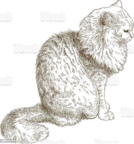 Engraving illustration of cat vector id639772368?b=1&k=6&m=639772368&s=612x612&h=gx8pa5bizlooq9zc9iaha5gbgzdefpp9sy4qqgii3r4=