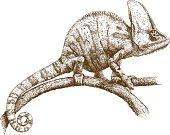 istock engraving illustration of chameleon 545127830