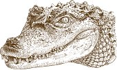 engraving illustration of crocodile head