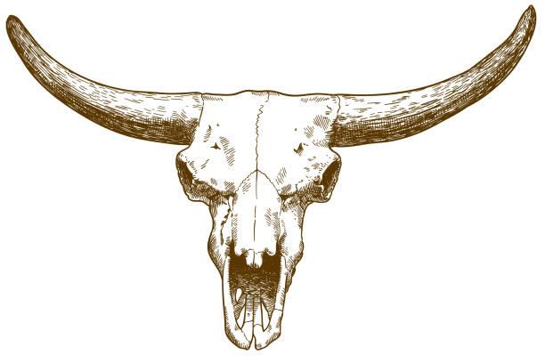 illustration der steppe bison schädel gravur - eiszeit stock-grafiken, -clipart, -cartoons und -symbole