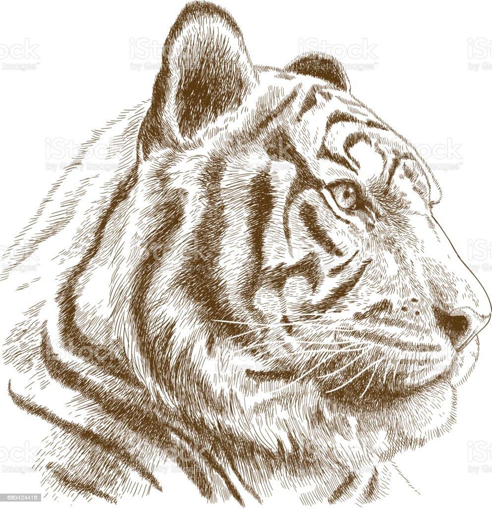 engraving illustration of tiger head