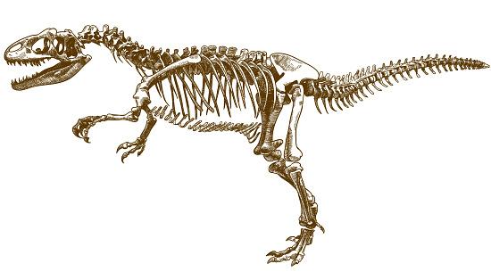 grabado de la ilustración del esqueleto de tyrannosaurus