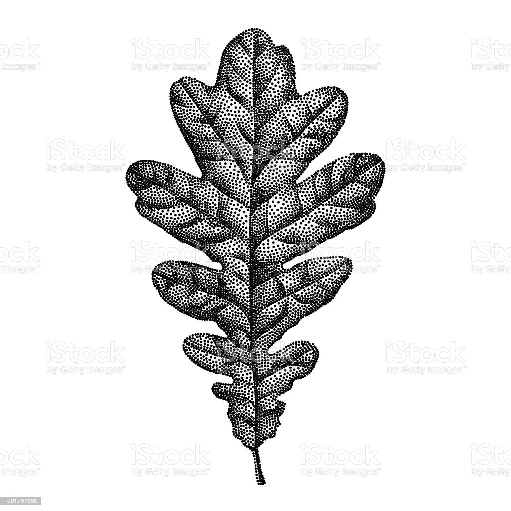 Engraving Oak Leaf Hand Drawn Vector Illustration vector art illustration