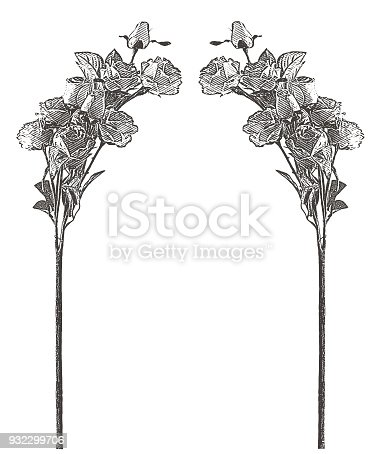 Engraving of a Rose Floral frame with copy space