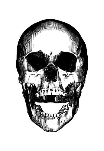 Engraving of human skull open jaw illustration isolated on white BG