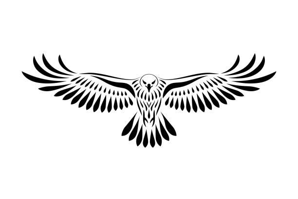 79 330 Bird Of Prey Illustrations Royalty Free Vector Graphics Clip Art Istock