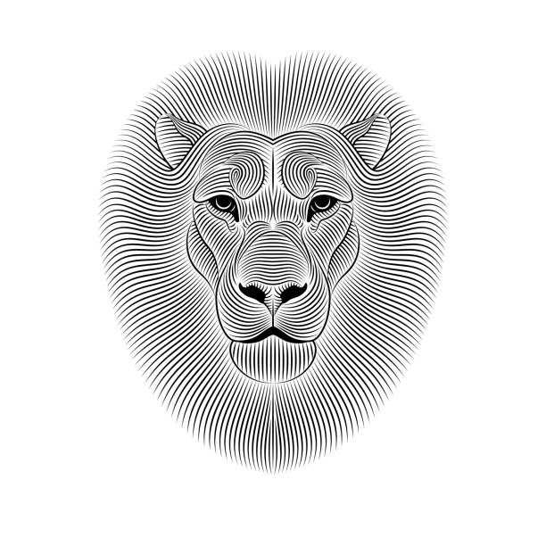 Best Black And White Lion Illustrations, Royalty-Free ...
