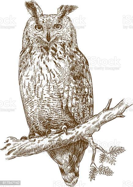 Engraving owl vector id517347142?b=1&k=6&m=517347142&s=612x612&h=i d3cbaep2rlhkxh9hiz4cm3vlz5ifzcp6sgfsg8k6s=