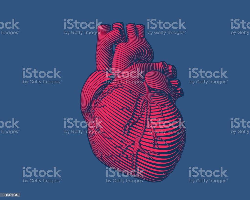Gravure van rode menselijk hart moderne stijl op blauwe BG - Royalty-free Abstract vectorkunst