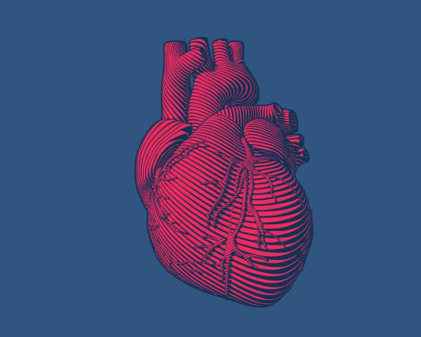 在藍色 bg 上雕刻紅色人的心臟現代樣式 - 人體部分 幅插畫檔、美工圖案、卡通及圖標