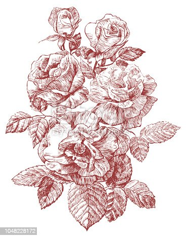 engraving rose vector illustration. three flowers and buds