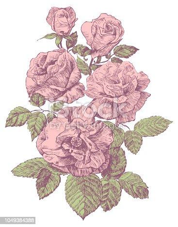 engraving rose vector illustration
