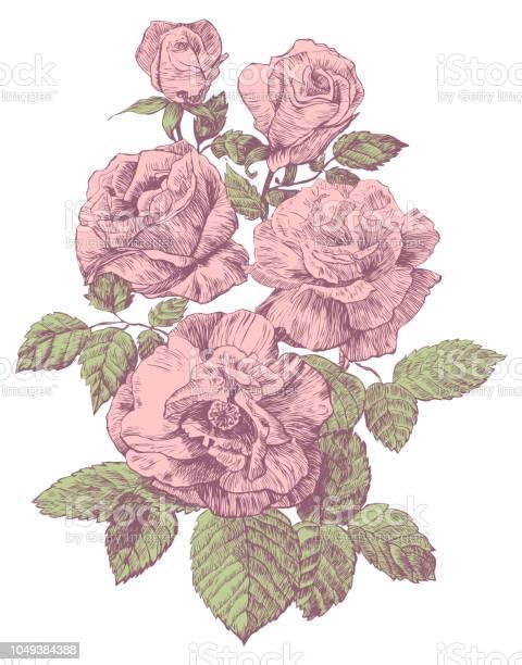 Engraving rose vector illustration vector id1049384388?b=1&k=6&m=1049384388&s=612x612&h=rgjb3anhyv8sjj42cby dc7thog8fudmss83d8 spbu=