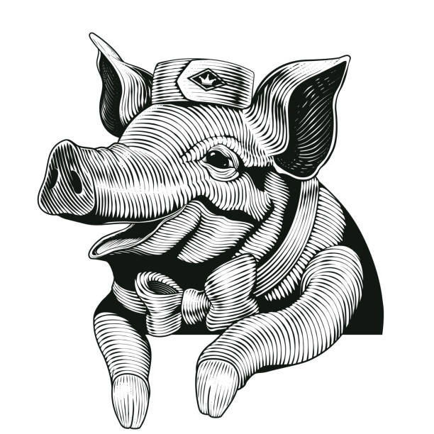 engraving style pig - delis stock illustrations