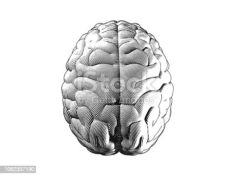 Monochrome human brain top view engraving illustration isolated on white background