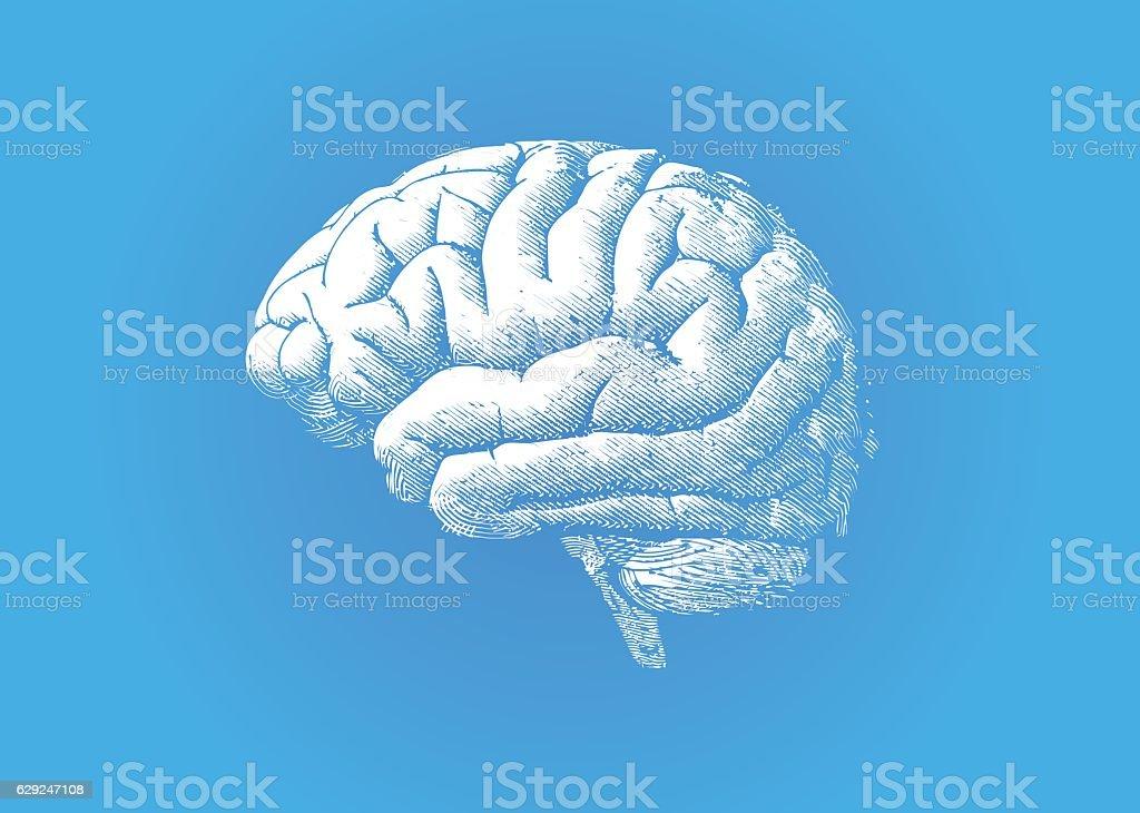 Engraving white brain on blue BG vector art illustration