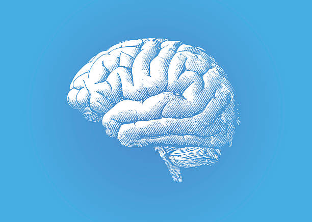 Engraving white brain on blue BG vector art illustration
