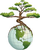 Concept image for a greener world.  Environmental Awareness - Bonsai Tree Growing on Top of Globe.  The globe has the continents North and south America with lines of latitude and longitude.  the roots of Bonsai tree are visibly draping over the top of the globe.