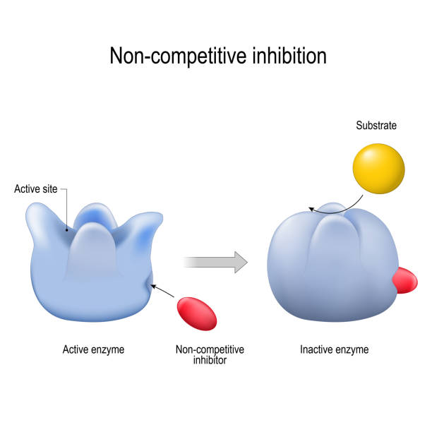 enzyme. Non-competitive inhibition. inhibitor is a molecule vector art illustration