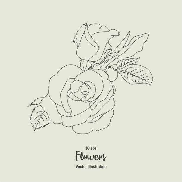 Free Flower Sketch Pull Material, Sketch, Black And White, Flowers PNG  Transparent Clipart Image and PSD File for Free Download | Flower sketches,  Black and white flowers, White flower png