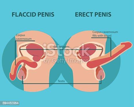 Organ Penis sex