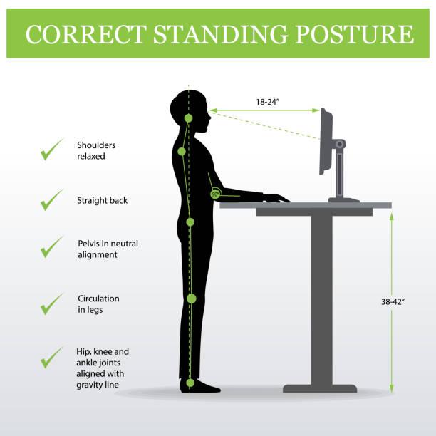 ergonomic. Correct standing posture and Height adjustable table ergonomic. Correct standing posture on height adjustable desk or table sitting and standing pose of a man. Healthy sitting pose posture stock illustrations