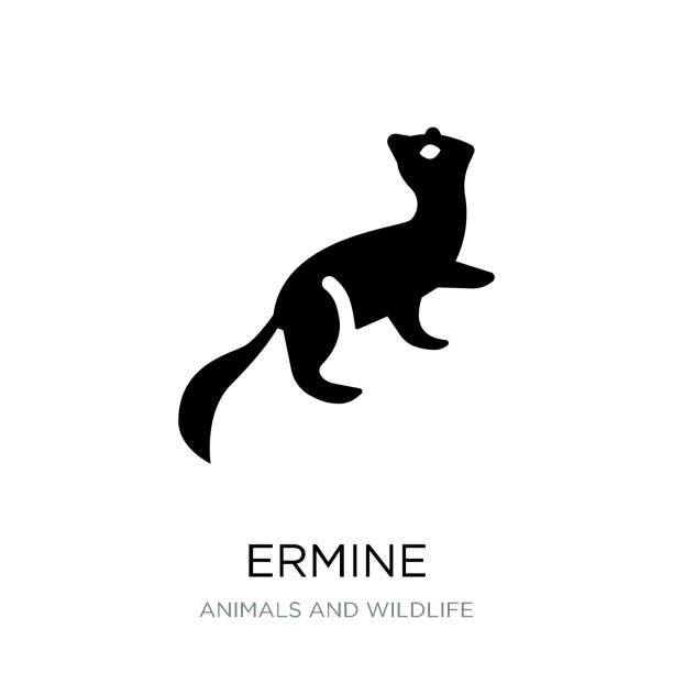ermine icon vector on white background, ermine trendy filled icons from Animals and wildlife collection ermine icon vector on white background, ermine trendy filled icons from Animals and wildlife collection ermine stock illustrations