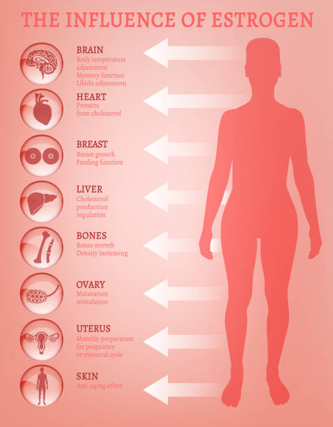 Estrogen effects Infographic Estrogen effects Infographic image isolated on a light pink background. Female sex hormone and it's role in human body. Scientific, educational and popular-scientific concept. oestrogen stock illustrations