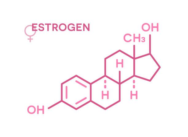 Estrogen hormones molecular formula. Sex hormone symbol Estrogen hormones molecular formula. Sex hormone symbol isolated on a white background. oestrogen stock illustrations